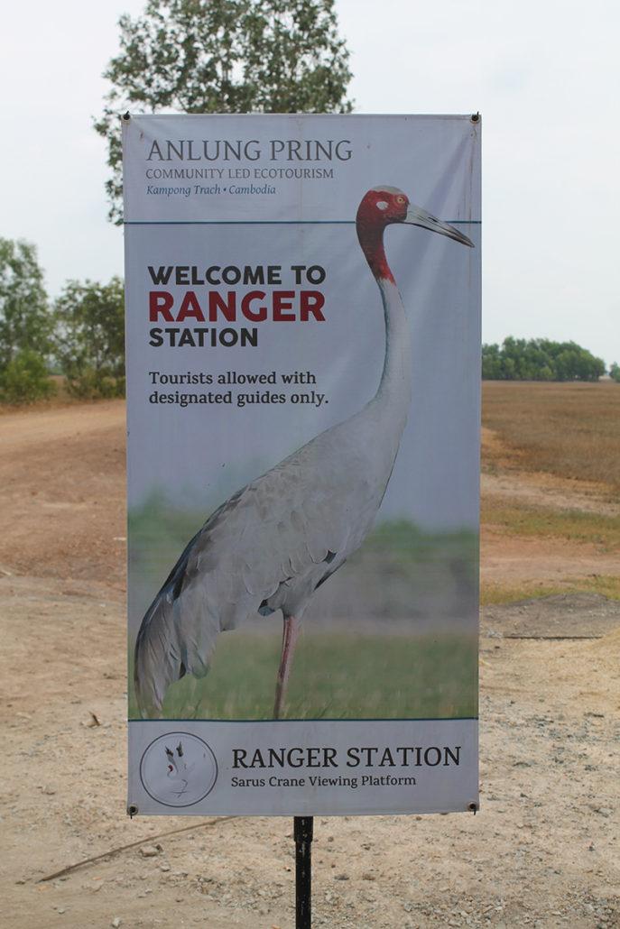 Sarus Crane Information, Anlung Pring
